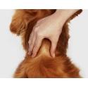 Frontline Combo na blechy Spot-On aplikace pes
