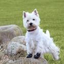 ochranné botičky pro psy Walker Active