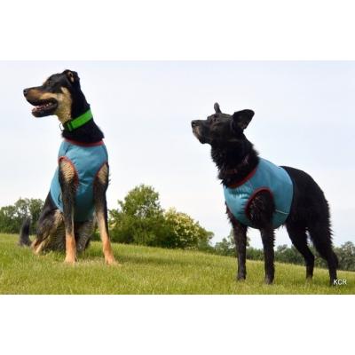 Vesta chladící pro psa Hurtta Cooling Vest modrá Dogmans Liberec