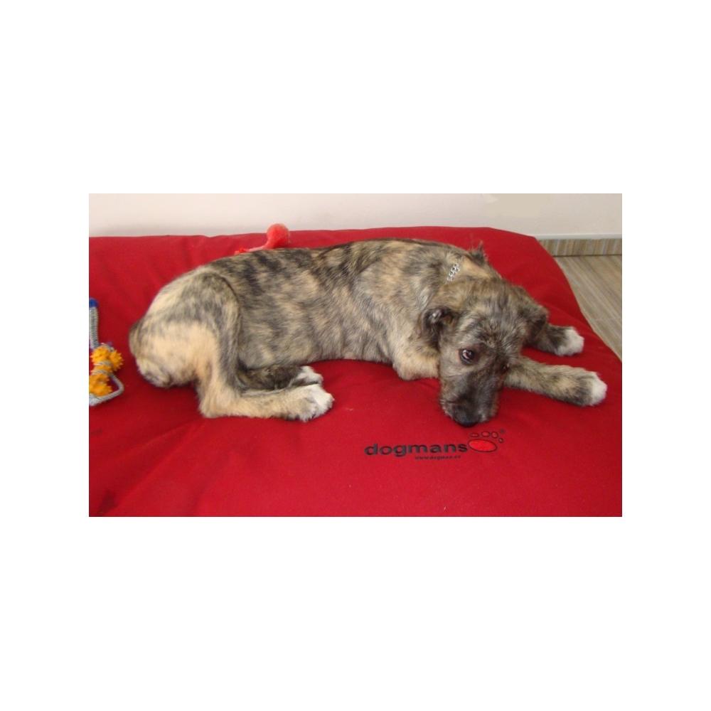 matrace pro psa DOGMANS runway 150x120cm červená, potřeby pro psy Dogmans Liberec