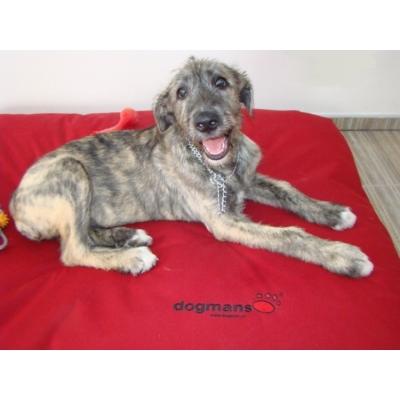 Dogmans Runway140 Matrace XL pro velkého psa