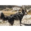 Hurtta X-Sport sportovní Postroj na psa v zápřahu