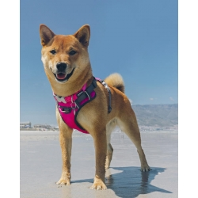 Red Dingo Postroj Polstrovaný XL