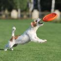 CoLLaR PitchDog - létající DISK pro psy -orange