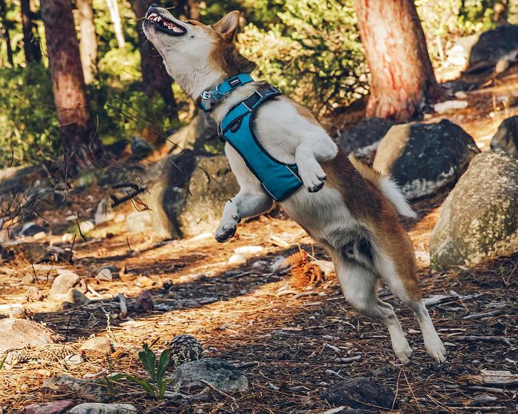 postroj red dingo na středního psa